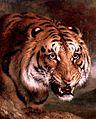 20140924164737!Bengal Tiger d4617011x.jpg