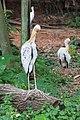 2016 Singapur, Jurong Bird Park (115).jpg