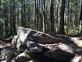 2017-05-16 10 52 43 The summit of Mount Rogers (highest mountain in Virginia), within the Lewis Fork Wilderness, on the border of Grayson County and Smyth County, Virginia.jpg