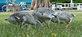 2017-07-04 13-45-58 oiseaux.jpg