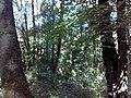 35-211-5004 Казавчинські скелі Лютинська 172.jpg