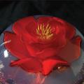 3d-Gelatine-Blume Freesie 1f.png
