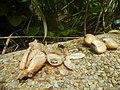 4336Cuisine foods of Bulacan 03.jpg