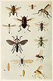 56-Indian-Insect-Life - Harold Maxwell-Lefroy - Syrphidae etc.jpg
