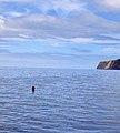 Açores 2010-07-23 (5165737645).jpg