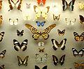 AMNH butterfly conservatory 3.jpg