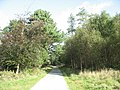 A Scots Pine shelters the Forest Road - geograph.org.uk - 255707.jpg