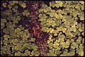 A TOAD, OREGON OXALIS AND MOSS IN THE QUEETS RIVER VALLEY OF OLYMPIC NATIONAL PARK, WASHINGTON - NARA - 555067.jpg