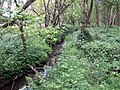 A Woodland Stream - geograph.org.uk - 430935.jpg