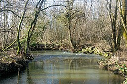 A bend in the River Wolf near Broadwoodwidger - geograph.org.uk - 1701140.jpg
