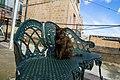 A feral cat in Malta, 2016-12-25-4.jpg