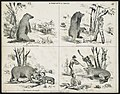 A fight with a grizly (i.e. grizzly) - Lith. & Pubd. by Britton & Rey, S. Franco. LCCN2011661683.jpg