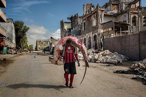 Мужчина несёт молотоголовую акулу по улицам Могадишо (Сомали)