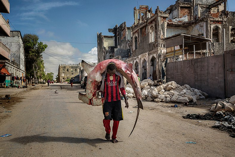 Photograph of Somali man in sports clothes walking past ruins of a house while carrying a bloody hammerhead shark on his neck