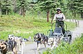 A ranger rides a demonstration cart during a program in the sled dog kennels (464f9102-201d-4cf3-afde-3639850d7476).jpg