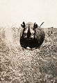 A rhinoceros charges the photographer in Africa.jpg