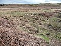 A wet area on Baildon Moor - geograph.org.uk - 748471.jpg