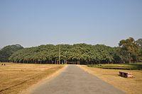 Acharya Jagadish Chandra Bose Indian Botanic Garden - Howrah 2011-01-08 9728.JPG