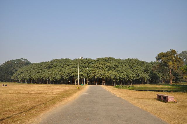 The great Banyan Tree in India