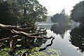 Acharya Jagadish Chandra Bose Indian Botanic Garden - Howrah 2011-01-08 9732.JPG