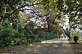Acharya Jagadish Chandra Bose Indian Botanic Garden - Howrah 2011-01-08 9785.JPG