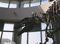 Acrocanthosaurus skeleton.jpg