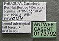 Acromyrmex coronatus casent0173792 label 1.jpg