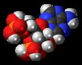Adenosine-3',5'-bisphosphate-3D-spacefill.png