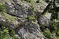 Admont-Weng - Naturdenkmal 958 - Kataraktstrecke der Enns - XI.jpg