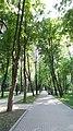Alleja s jugo-vostochnoj storony - babushkinskij park.jpg