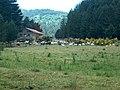 Allevamenti Bovini - panoramio.jpg