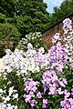 Alnwick Garden - geograph.org.uk - 2524201.jpg