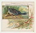 American Coot, from the Game Birds series (N40) for Allen & Ginter Cigarettes MET DP839131.jpg