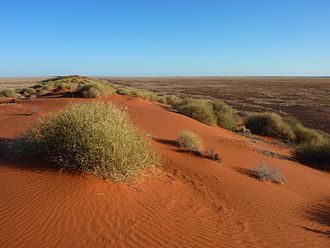 Simpson Desert - Dunes at the edge of the Simpson Desert
