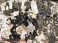 Andradite var. melanite, aragonite 7100.0381.jpg