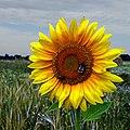 Angers, Maine-et-Loire, France - Flickr - pom'..jpg