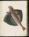 Animal drawings collected by Felix Platter, p1 - (56).jpg