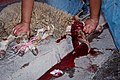 Animal sacrifice at Eid.jpg