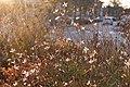Annecy-le-Vieux (50771766302).jpg