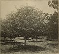 Annual report of the Fruit Growers' Association of Ontario, 1900 (1901) (14785672183).jpg