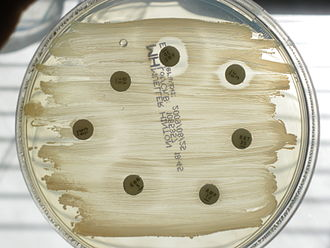 Antibiotic sensitivity - Antibiogram, palatine tonsil smear of a dog with tonsillitis, Mueller-Hinton agar. Only Amoxicilline-Clavulanic acid (AMC) and Chloramphenicol (C) show an inhibition of bacterial growth.