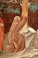 Antonio vite e collaboratore, arbor vitae, trasfigurazione e miracolo della madonna della neve, 1390-1400 ca. 22 san francesco.jpg