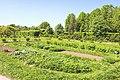 Apothecary garden Аптекарский огород 3.jpg