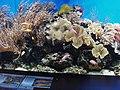 Aquarium with coral at London Zoo - geograph.org.uk - 823528.jpg