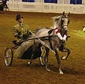 Arabian Fine Harness Horse (2668752749).jpg