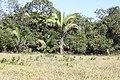Araguainha - State of Mato Grosso, Brazil - panoramio (1084).jpg