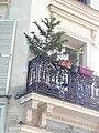 Araucaria on balcony, place des Abbesses, Paris.jpg