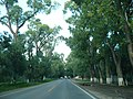 Arboleda carretera Loreto-San Marcos - panoramio.jpg