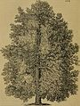 Arboretum et fruticetum Britannicum; or, The trees and shrubs of Britain, native and foreign, hardy and half-hardy, pictorially and botanically delineated, and scientifically and popularly described; (14793666903).jpg