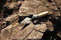 Archaeology Trowel.jpg
